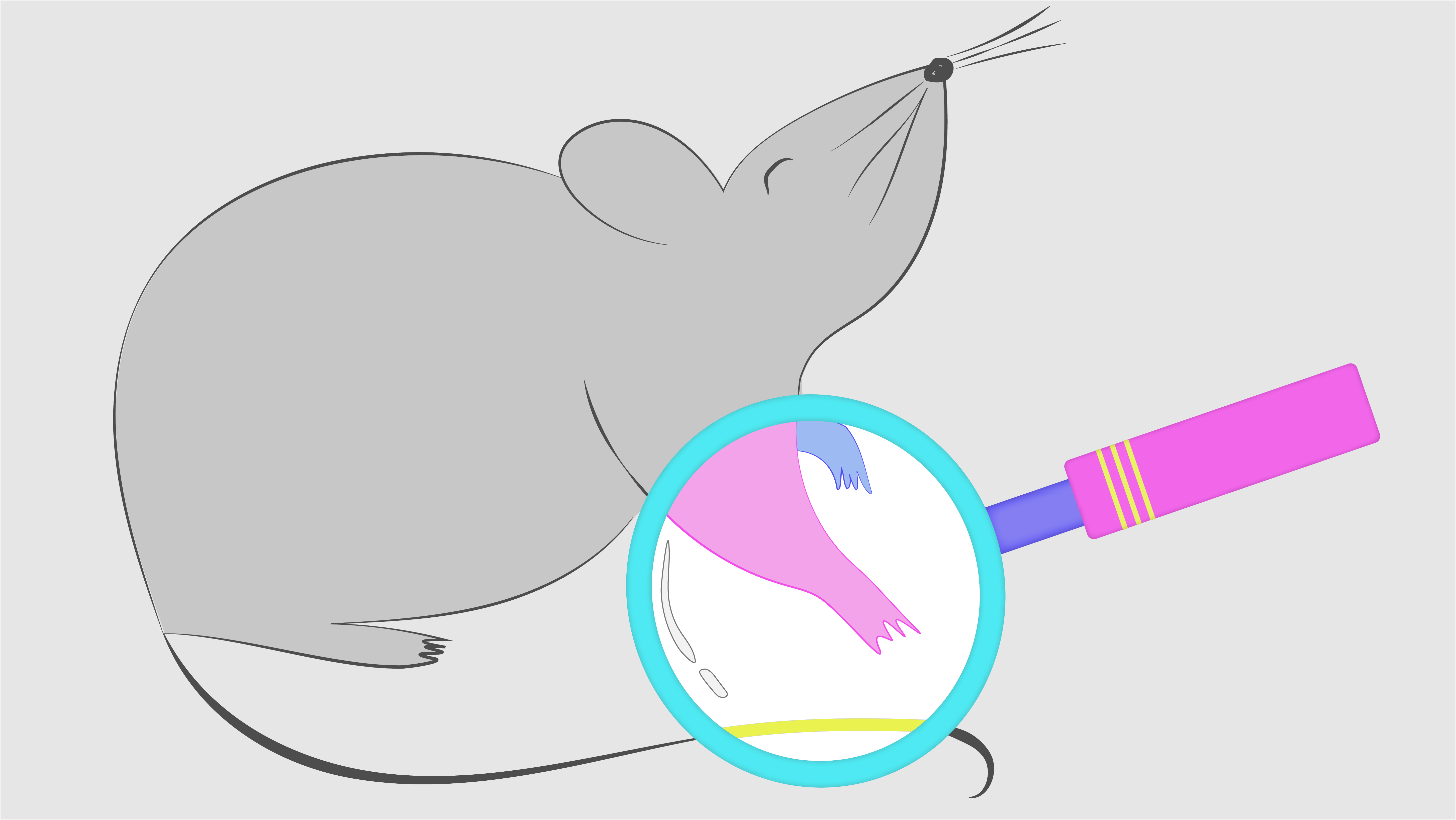 An illustration of a rat with a magnifying glass held up to it. Rather than magnifying it, the glass turns the grey rat technicolour.